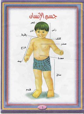 جسم الانسان للاطفال